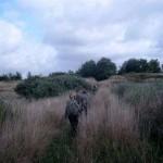 patrolowanie terenu