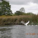spływy kajakowe  (2)